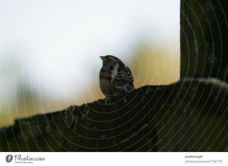noch'n Spatz ... Einsamkeit Wand Frühling Traurigkeit Mauer Vogel warten Hoffnung Trauer Erwartung