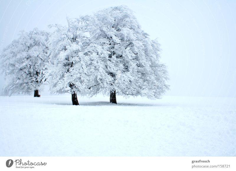 wintereinbruch Natur Baum Winter Wald Schnee Eis Angst Frost Panik Eiskristall