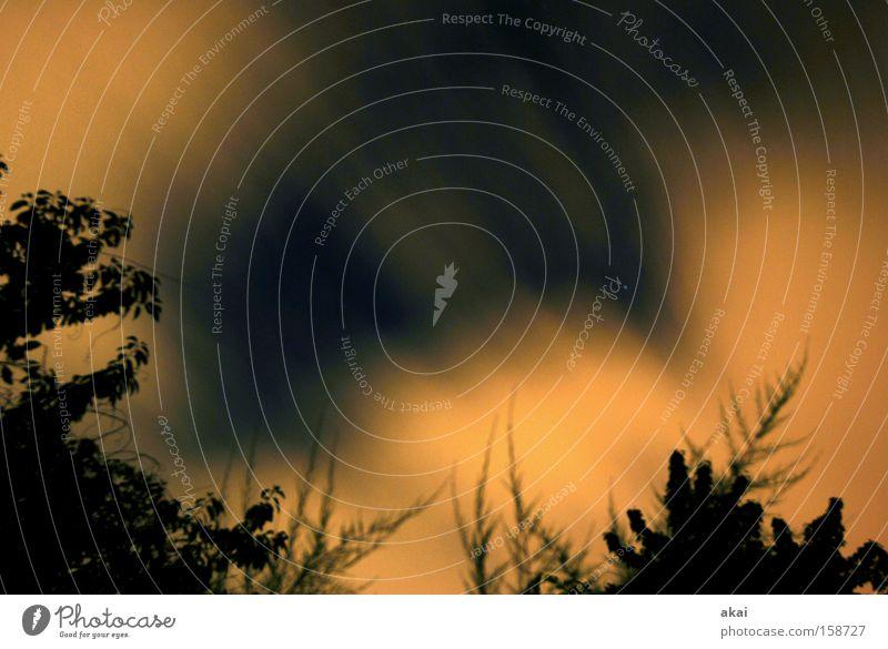 Nachtwind Natur Baum Sonne Wolken Stern Baumrinde Sternenhimmel Wolkenfeld Wolkenloch
