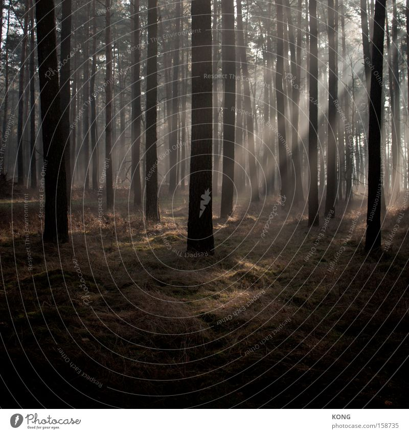 II/I Sonne Wald Lampe Stimmung Nebel Frieden Strahlung Licht erleuchten mystisch Märchen Dunst strahlend Himmelskörper & Weltall Atmosphäre Lichtstrahl