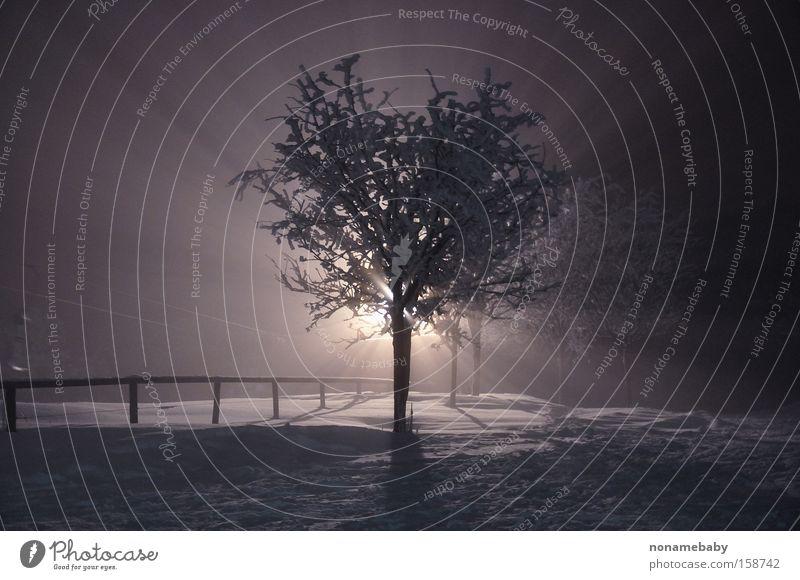 Nebelbaum Baum Nacht Mysterium mystisch geheimnisvoll Winter Schnee dunkel Einsamkeit Winternacht