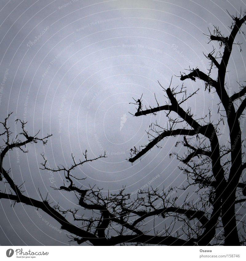 Krone Baum Baumkrone Ast Zweig Geäst beschnitten Himmel grau Silhouette kahl Winter bedeckt trüb