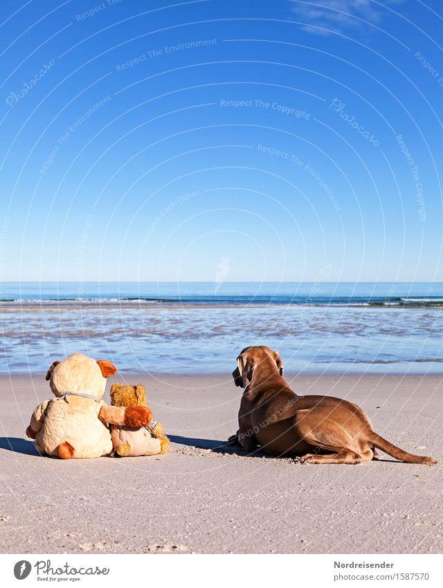 Meerblick Hund Ferien & Urlaub & Reisen Sommer Wasser Sonne Erholung Freude Strand Ferne Freiheit Sand Zusammensein Freundschaft Schönes Wetter Abenteuer