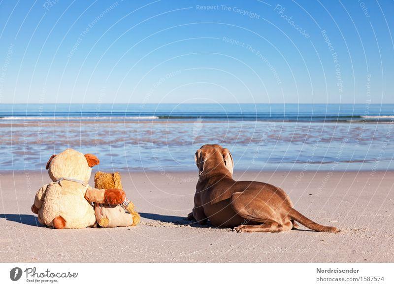 Fernweh Ferien & Urlaub & Reisen Freiheit Sommerurlaub Strand Meer Sand Wasser Wolkenloser Himmel Schönes Wetter Nordsee Ostsee Tier Hund Teddybär Stofftiere