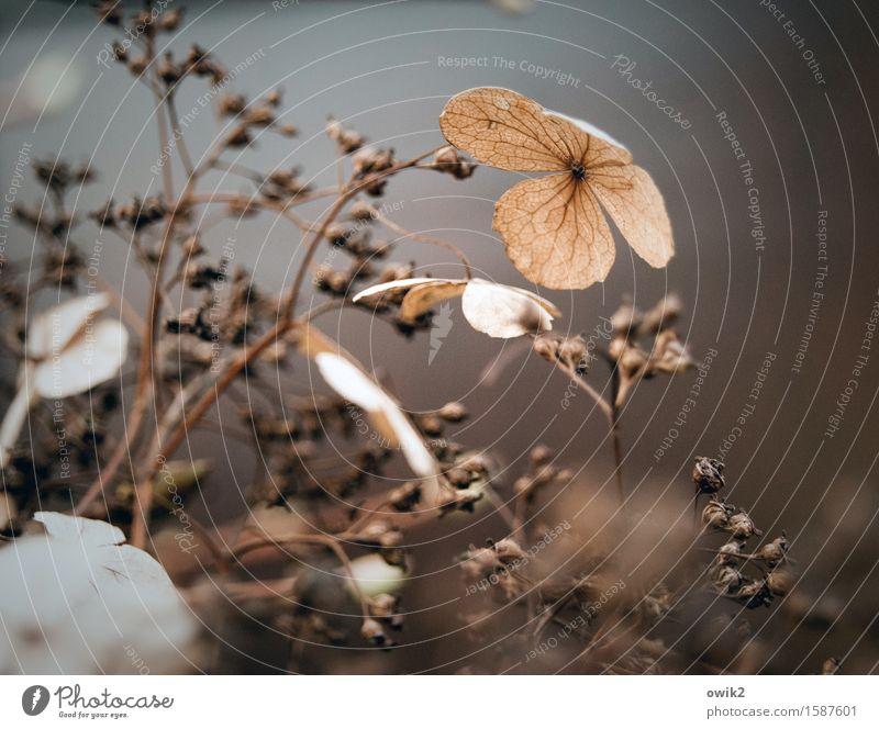 Echt Natur Pflanze Sträucher Blüte Zweig Hecke dehydrieren klein nah ruhig Traurigkeit bizarr geheimnisvoll Hoffnung Idylle unschuldig Verfall Vergänglichkeit