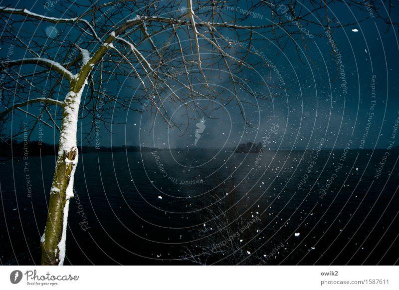 Gestöber Umwelt Natur Landschaft Pflanze Urelemente Himmel Horizont Winter Schönes Wetter Schnee Schneefall Baum fallen dunkel kalt Idylle Wolken Farbfoto