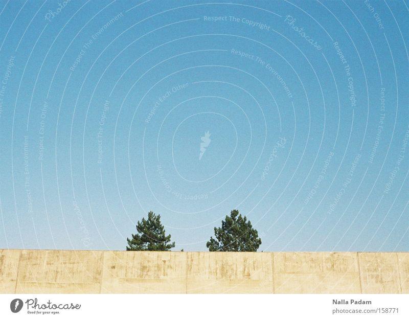 2 sind ein Paar Himmel blau grün Baum Einsamkeit Wand Mauer grau Park Beton Bochum