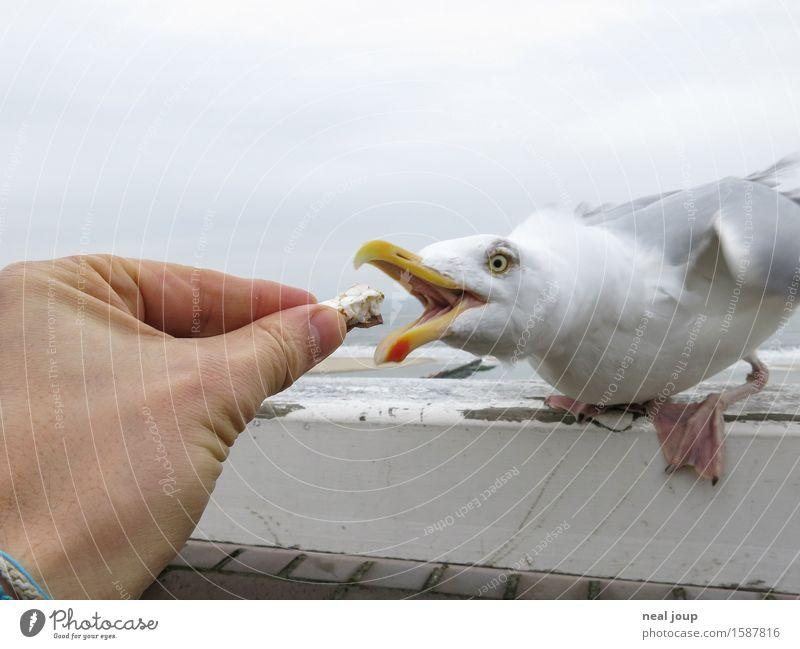 Finger weg! Fingerfood Snack Strand Hand Wolken Nordsee Tier Möwe 1 Fressen füttern Aggression frech maritim Geschwindigkeit blau grau Tierliebe Selbstlosigkeit