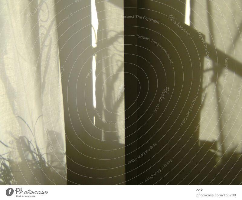 Schattendasein Wand Linie Raum Vergänglichkeit zart Zeichen Gemälde Vorhang Wohnzimmer durchsichtig Selbstportrait Kunst Ebene Illusion poetisch Schattenspiel
