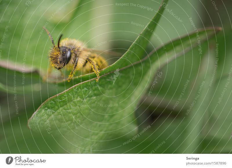 Summertime Natur Pflanze Tier Frühling Blatt Blüte Wiese Wald Wildtier Biene Tiergesicht Flügel 1 fliegen Honigbiene Insekt Erdbiene Erdwespe Farbfoto