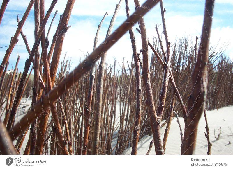 Gestrüpp Natur Wasser Sonne Pflanze Sommer Strand