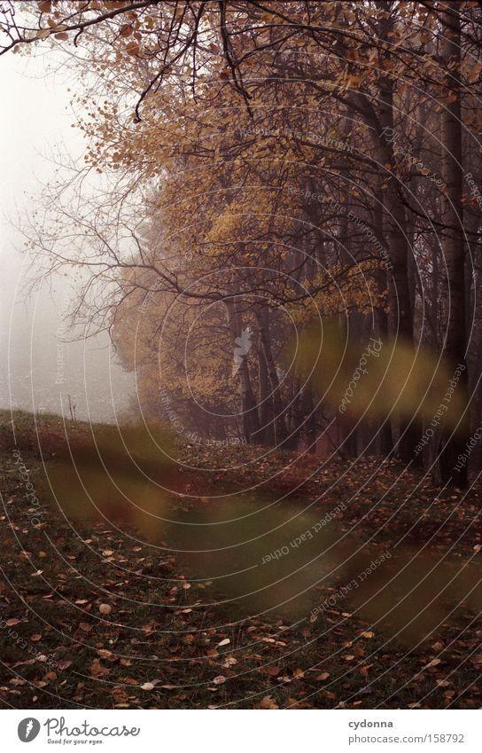 Waldrand Natur Baum Blatt Ferne Leben Herbst Wiese Landschaft Vergänglichkeit Sehnsucht analog Jahreszeiten