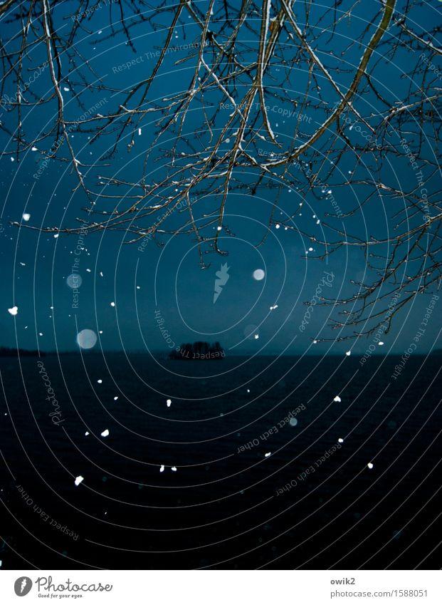 Kaltwald Umwelt Natur Landschaft Horizont Winter Klima Wetter Schönes Wetter Schnee Schneefall Baum Zweig Wald Insel See Bewegung fallen dunkel Idylle Farbfoto
