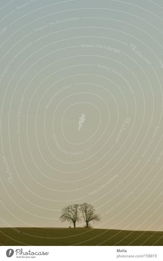 Zwei Halbe sind ein Ganzer Himmel Baum blau ruhig Ferne Erholung 2 Doppelbelichtung