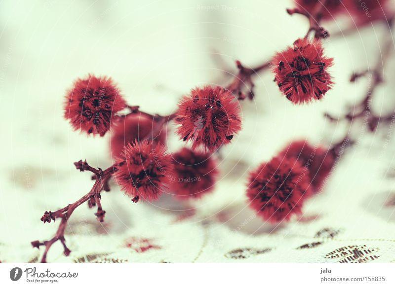 im fernen osten III Pflanze Blume Zweig Trockenblume Asien Quaste rot weiß Spielen Stoff Dekoration & Verzierung
