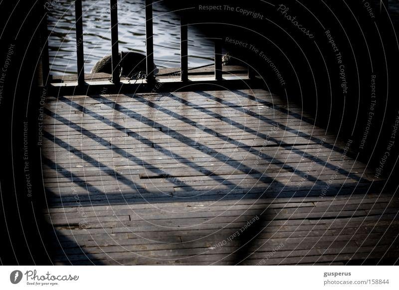 lines Gitter Schatten Holzfußboden Wasser Licht Muster Hafen grid shadow water pattern