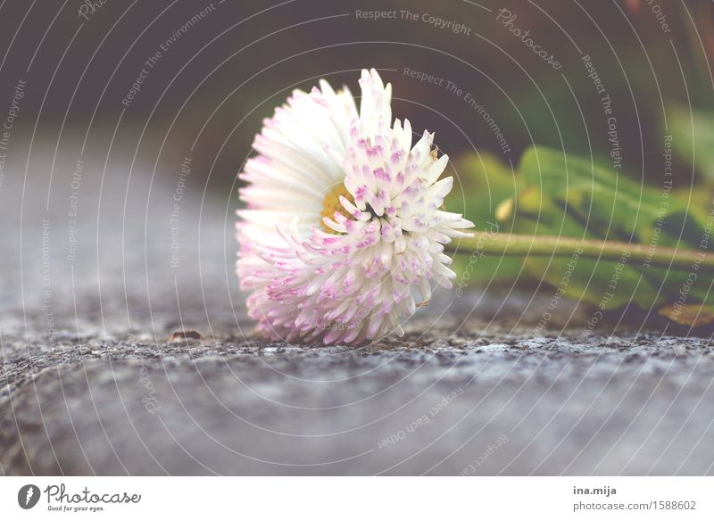 Frühlingsende? Natur Pflanze Sommer weiß Blume Umwelt Blüte klein liegen frisch Blühend Vergänglichkeit nah Duft Umweltschutz