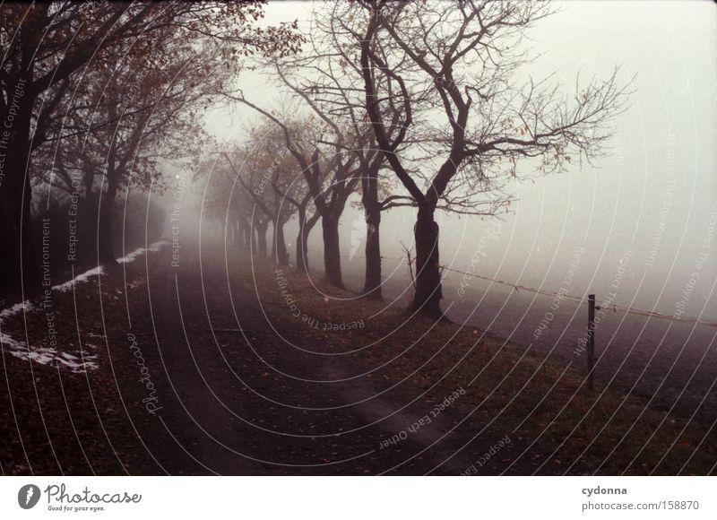 Weg ins Ungewisse Herbst Baum Natur Vergänglichkeit Jahreszeiten Landschaft Sehnsucht analog Ferne Blatt Leben Nebel Allee Wege & Pfade kalt leer