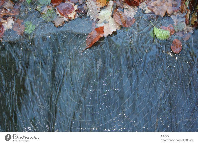 Wasserwand Blatt Herbst glänzend Fluss Bach Wasserfall fließen