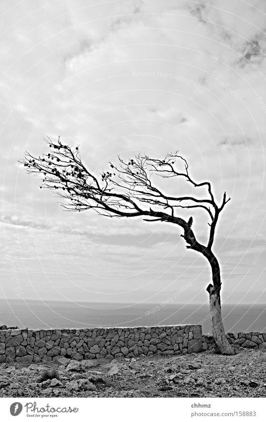 Wind von rechts Baum Küste Mauer karg Einsamkeit Zweig Meer Horizont Wolken Ferne Aussicht Felsen steinig Vergänglichkeit