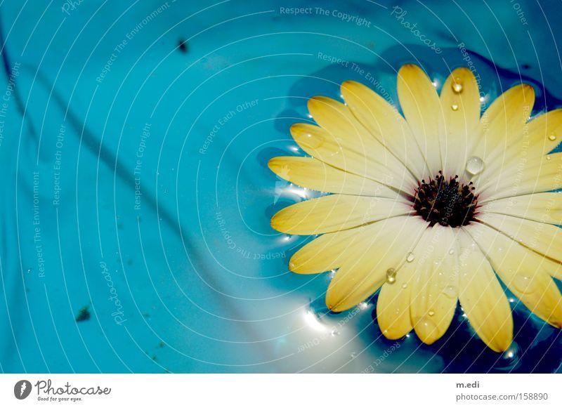 Blumenwasser Wasser Blume blau Sommer gelb Wärme Wassertropfen Schwimmbad Sport
