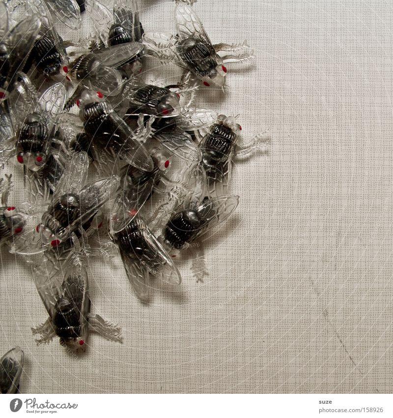 Fliegentod schwarz grau lustig Angst Tisch Dekoration & Verzierung Tiergruppe Kreativität Kunststoff Karneval gruselig Insekt chaotisch durcheinander Panik