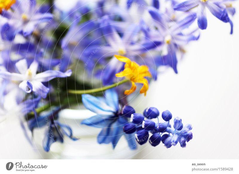 Frühlingsblümchen Natur Pflanze blau Farbe weiß Umwelt gelb Leben Blüte Zufriedenheit Dekoration & Verzierung authentisch ästhetisch Kreativität Blühend