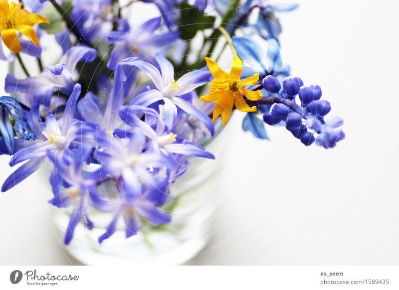 Selbst gepflückt Natur Pflanze blau Sommer Farbe weiß Blume Freude gelb Leben Blüte Frühling Glück Dekoration & Verzierung authentisch ästhetisch