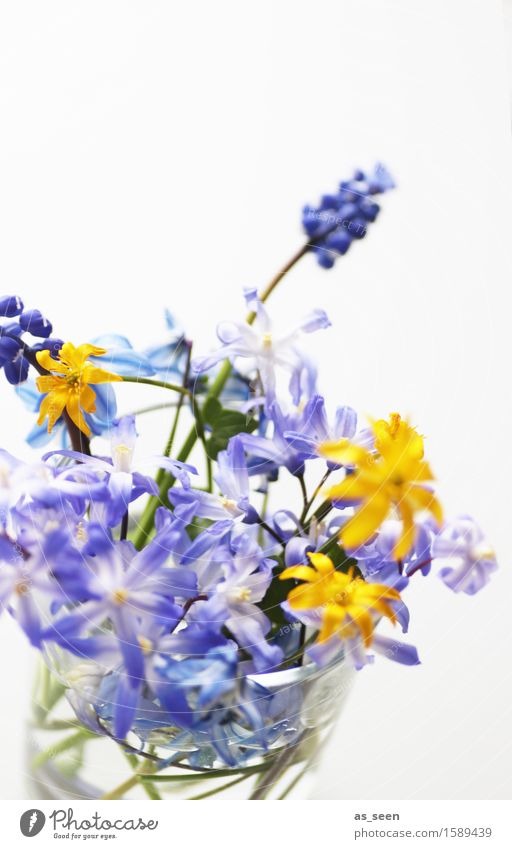 Sträußchen Lifestyle Design Gesundheit Wellness harmonisch Dekoration & Verzierung Muttertag Ostern Umwelt Natur Pflanze Frühling Sommer Blume Blatt Blüte