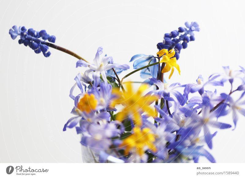 Muttertag Lifestyle Wellness harmonisch Freizeit & Hobby Ausflug Garten Dekoration & Verzierung Ostern Umwelt Natur Pflanze Frühling Sommer Blume Blüte