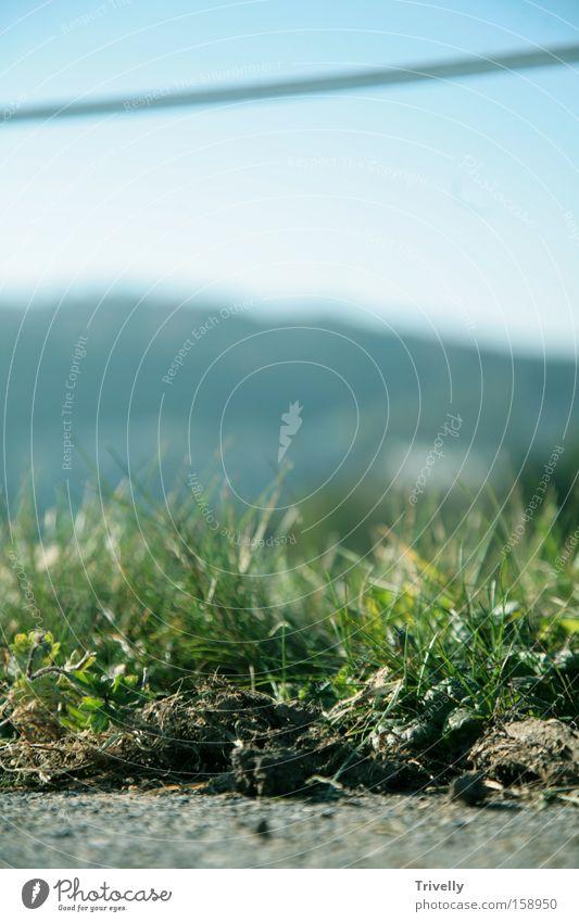 Weid(t)e grün Sommer Ferne Wiese Gras Landschaft Horizont Erde frisch Bauernhof Weide Immergrün