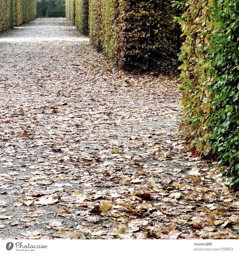 """""""Labyrinth Alltag"""" oder """"Viele Wege führen nach Rom"""" Irrgarten Garten Park grün Herbst Blatt Spaziergang Schlossgarten Aufgabe herausfordernd durcheinander"""