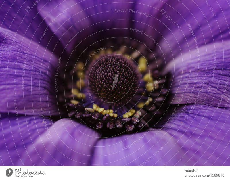 lila lila Natur Pflanze Sommer Blatt Blüte Frühling Garten Stimmung violett Blütenknospen Blütenblatt Blütenstempel
