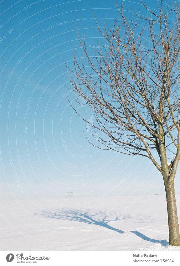 Baum in Winterwonderland Natur Himmel weiß blau Pflanze kalt Schnee Landschaft Schönes Wetter kahl Bochum Wolkenloser Himmel