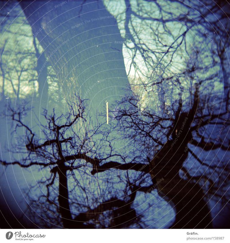 Geäst Natur Baum blau Winter dunkel Holga bedrohlich Ast Baumstamm Zweig durcheinander Doppelbelichtung Mittelformat