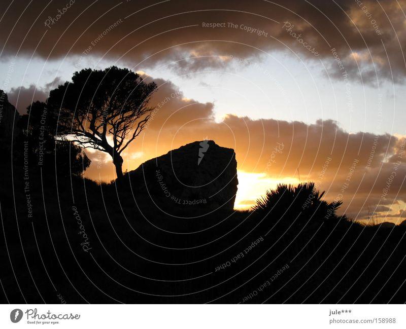 Sonnenuntergang Dämmerung Abend Wolken Pinie dunkel Schatten Skyline Horizont geheimnisvoll Berge u. Gebirge Himmel