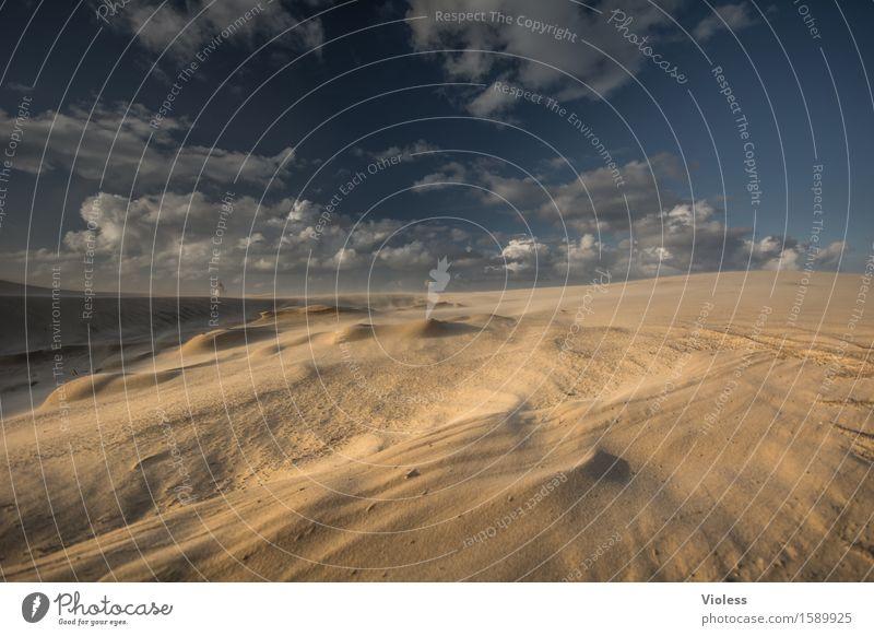 Wüstenplanet II Ferien & Urlaub & Reisen Sommer Sonne Strand Küste Bucht Nordsee entdecken Erholung Stranddüne Düne Rubjerg Wanderdüne Rubjerg Knude Leuchtturm