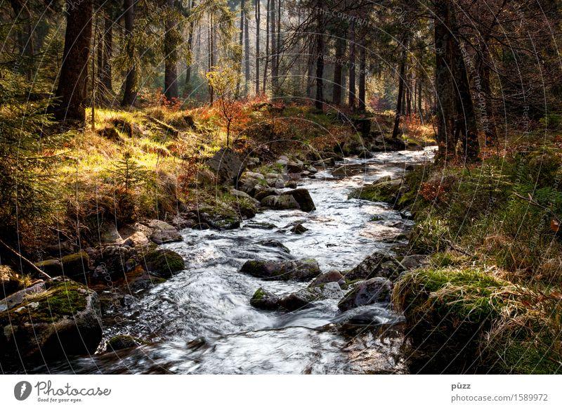 Waldbach Erholung ruhig Meditation Ferien & Urlaub & Reisen Ausflug Abenteuer wandern Umwelt Natur Landschaft Pflanze Wasser Sonne Klima Baum Gras Sträucher