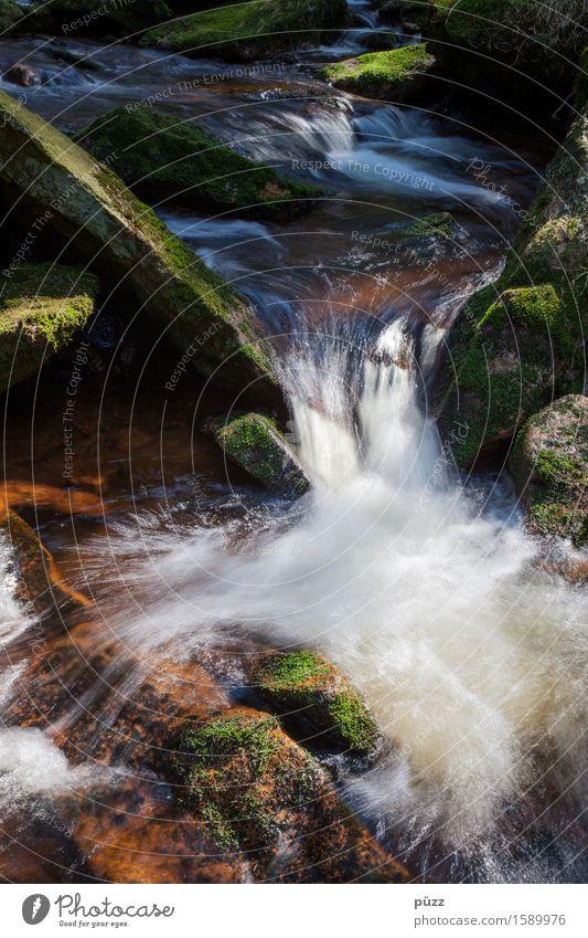 Bach Umwelt Natur Landschaft Pflanze Urelemente Wasser Moos Wald Fluss kalt nass Erfrischung feucht Harz Stein Felsen fließen Bewegung Reflexion & Spiegelung
