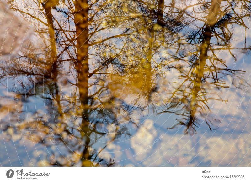 Yellow Mirror Umwelt Natur Landschaft Pflanze Urelemente Wasser Klima Klimawandel Baum Wildpflanze Wald Urwald Seeufer Teich Bach Fluss natürlich gelb schwarz