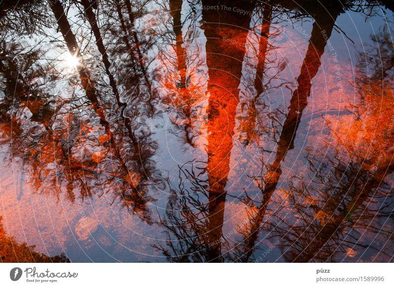 Red Mirror Umwelt Natur Landschaft Pflanze Wasser Sonne Sonnenlicht Wetter Schönes Wetter Baum Wald Teich See Bach Fluss dunkel nass rot schwarz Gefühle