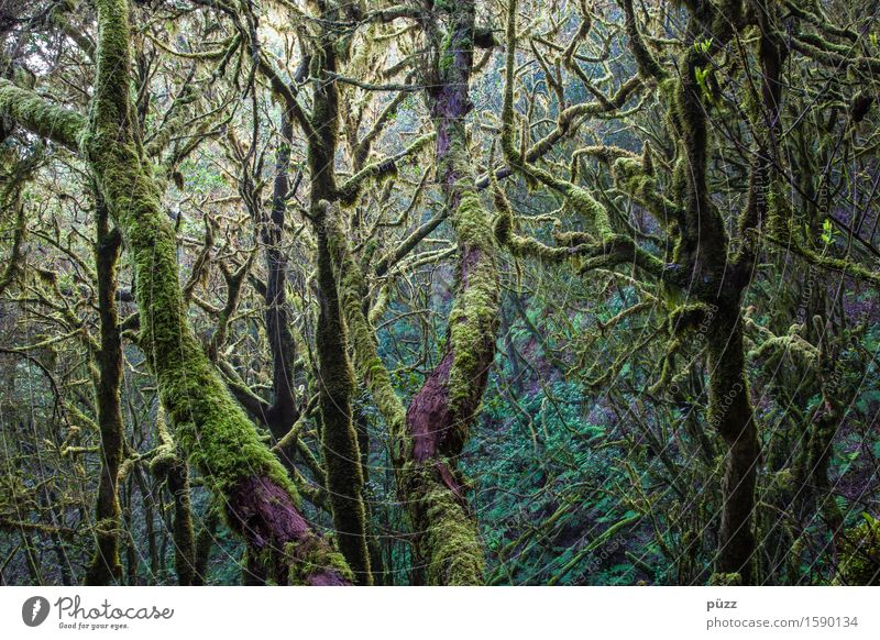 Ohne Moos nix los Umwelt Natur Landschaft Pflanze Baum Blatt Grünpflanze Wildpflanze exotisch Wald Urwald dunkel fantastisch natürlich grün Abenteuer Farbe
