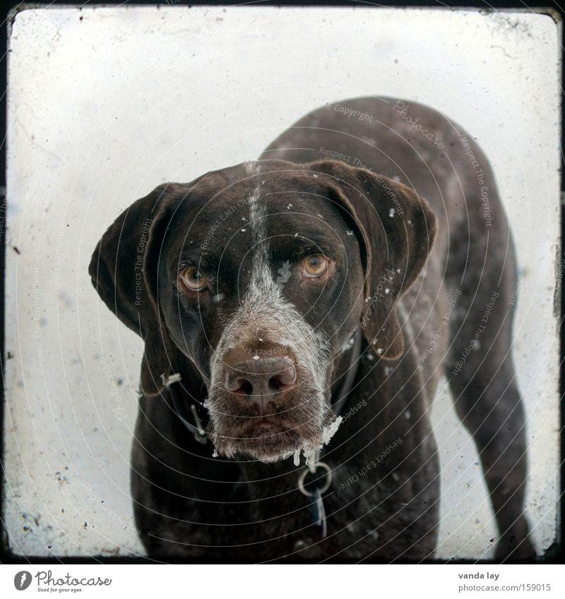 Bestätigt... Winter Tier Hund braun Kommunizieren Quadrat Säugetier Haustier Rahmen Treue intensiv Hundeblick
