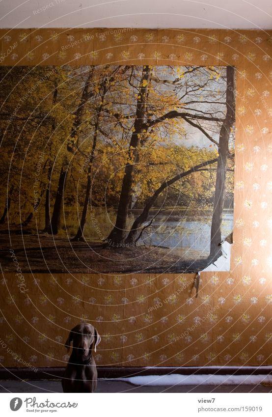Jagdhund im Wald Freude Wand Hund Fotografie Wohnung sitzen Ordnung retro Kommunizieren Körperhaltung Bild Zeichen Tapete Wohnzimmer