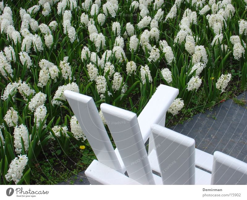 Ruhige Bank ruhig weiß Blume Tulpe Park Erholung