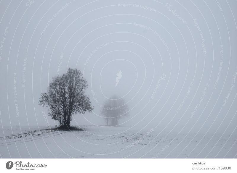 Ruhe weiß Baum Winter ruhig Schnee Traurigkeit Denken Nebel Trauer Frost Verzweiflung bewegungslos diffus schweigen