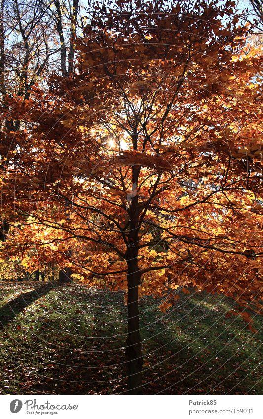 Laubbaum Herbst Baum Sonnenlicht Park Blatt Schatten ruhig