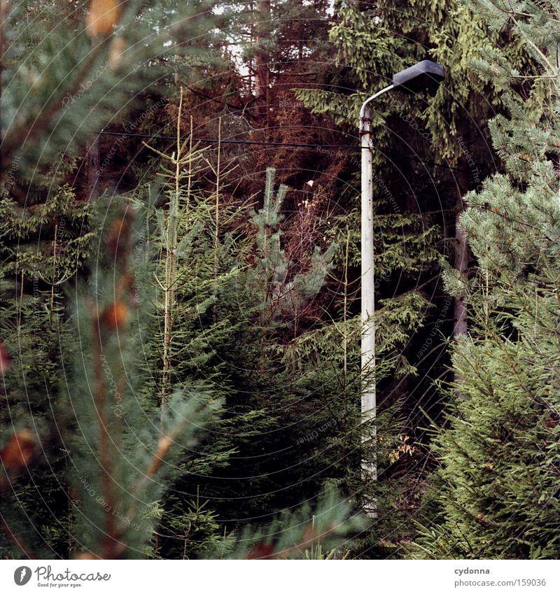 Im Betonmischer gewachsen Einsamkeit Wald Lampe Zeit trist Vergänglichkeit Laterne Vergangenheit DDR Gesellschaft (Soziologie) Osten Rest Nadelbaum Fichte