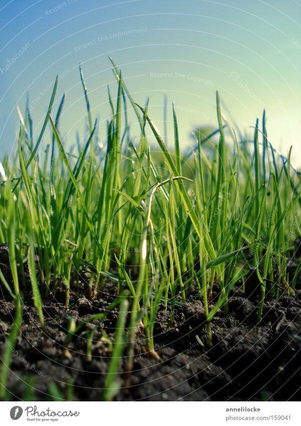 Ostergras Natur Pflanze Wiese Gras Frühling Park Feld Umwelt Erde frisch Hoffnung Wachstum Rasen Boden zart Blüte