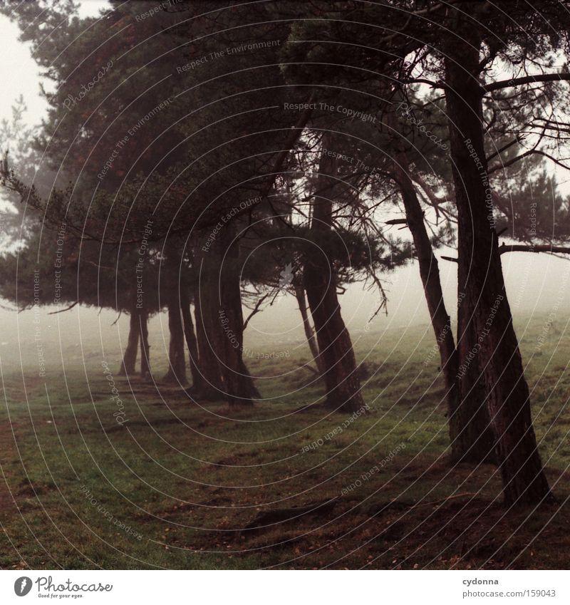Kiefernweg Natur schön Baum Ferne Herbst Wiese Wege & Pfade Landschaft Nebel leer retro Vergänglichkeit Sehnsucht analog Heimat Wurzel